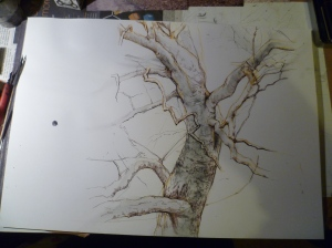 London Plane tree, Pen and ink