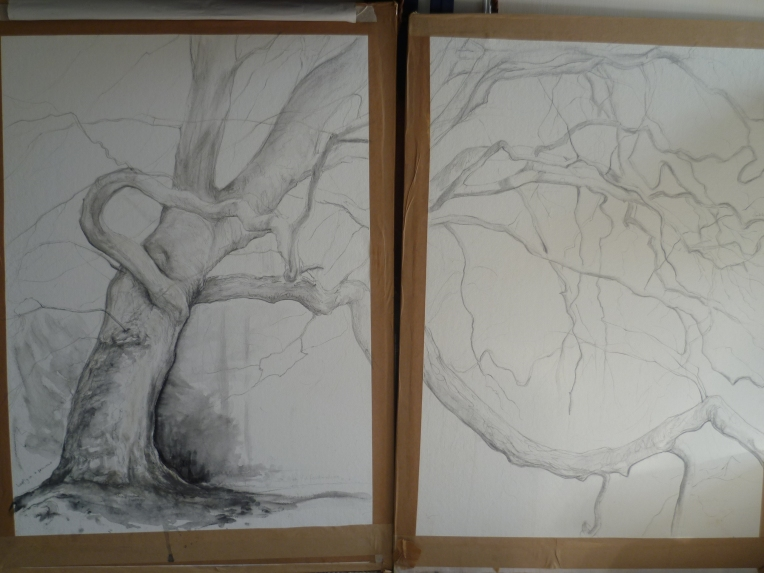 Obs. Drawing side by side