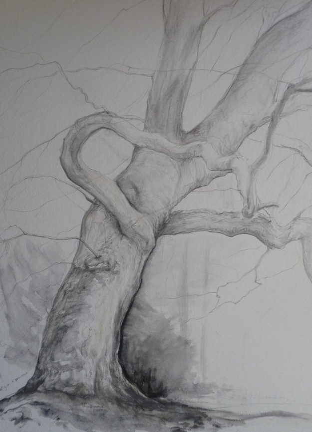 Spring 2014 Observational Drawing
