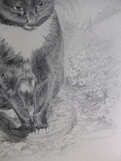 Black Cat Detail, 2014