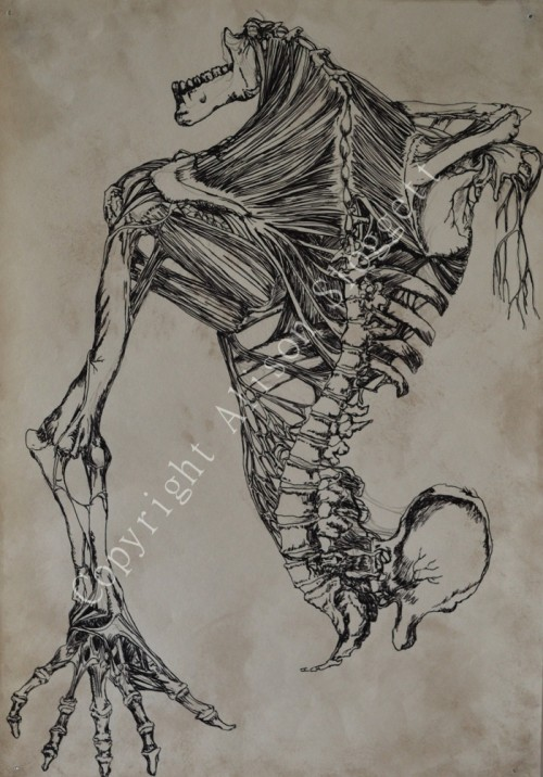 Monster Anatomy 3, 2009