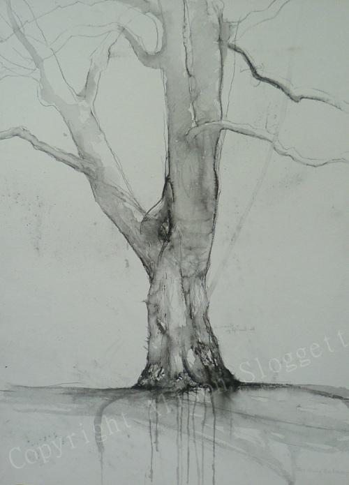 Plane Tree Two, 2013