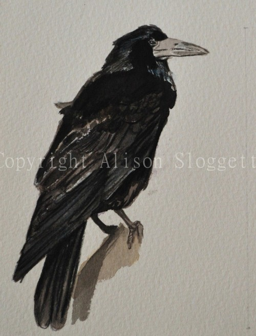 Rook, Watercolour , 2008