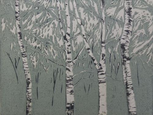 Silver Birch, 2013
