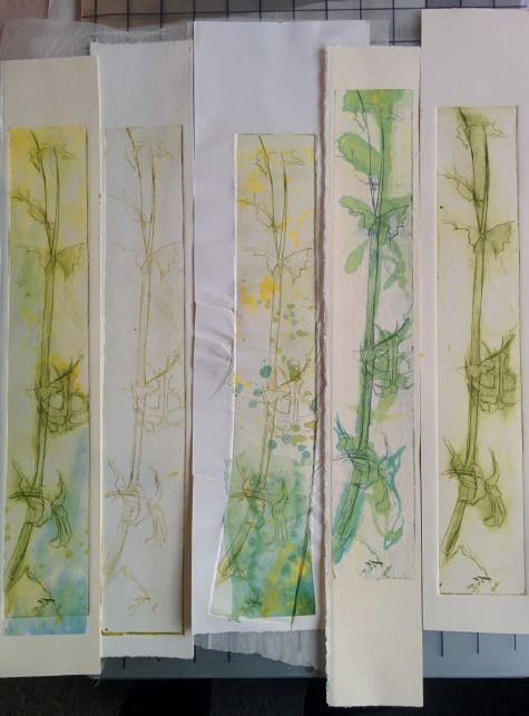 Sowthistle Drypoint variations