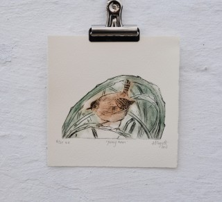 Jenny wren collagraph alison sloggett
